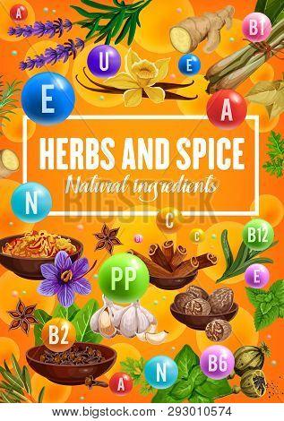Vitamins In Spices And Herbs, Organic Seasonings And Herbal Cooking Flavoring Ingredients. Vector Va