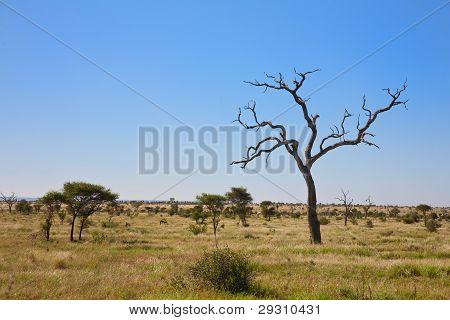 Savanna bush veld in South Africa