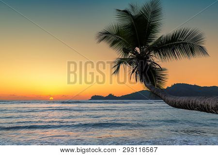 Beautiful Sunset Over The Sea With Coco Palm On The Beach In Jamaica Caribbean Island