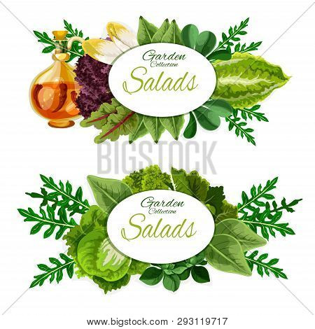 Leafy Vegetables And Salad Greens Of Healthy Nutrition And Vegetarian Food. Spinach, Lettuce And Aru