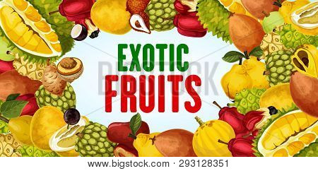 Exotic Fruits Vector Banner With Tropical Berries Frame Border. Durian, Quince And Pomelo, Sweetsop,
