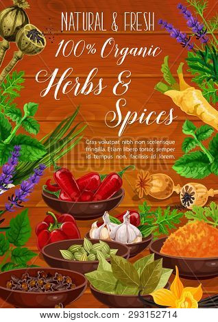 Herbs, Spices, Cooking Condiments And Vegetable Seasonings Vector Poster. Pepper, Garlic And Parsley