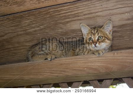 Kitty On A Wooden Beam, A Little Kitten Sits Under The Roof On A Wooden Beam