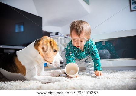 Dog With A Cute Caucasian Baby Girl On Carpet In Living Room. Dog Observe Baby Playing With A Cup.