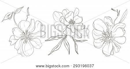 Vector Hand-drawn Black White Peony Flowers Drawings. Beautiful Monochrome Abstract Flower Illustrat