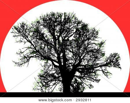 Silhouette Of Big Tree