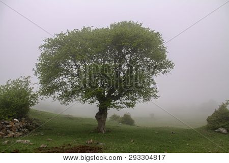 Mountain At Fog, Fog And Tree Iran, Gilan, Rasht One Tree In Fog At The Mountain