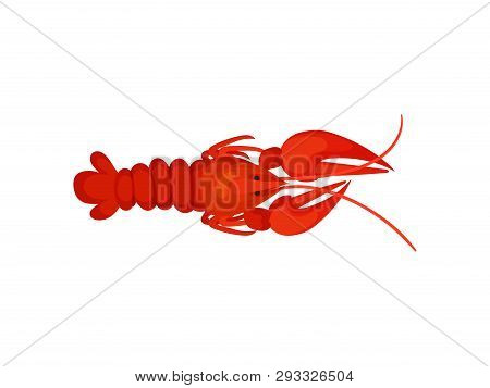 Red Lobster On White Background. Crayfish Concept.