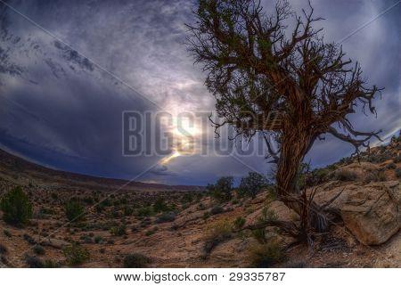 Dry Desert Tree