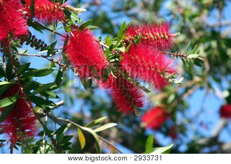 Brush Flowers