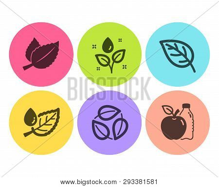 Mint Leaves, Plants Watering And Leaf Dew Icons Simple Set. Leaf, Leaves And Apple Signs. Mentha Her