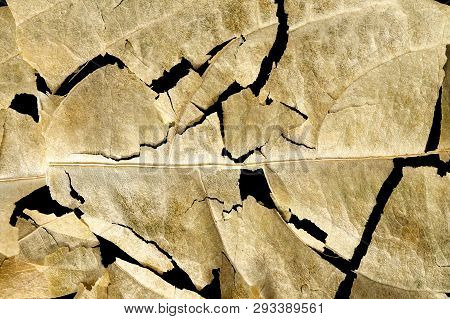 Macro Of Cracked Dry Leaf On Black