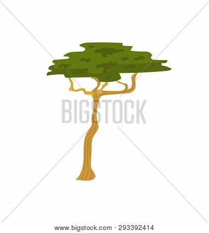 Decorative Tree With Green Leaves, Savanna Wood. Vertical View Of Wildlife Plant, Decoration Natural