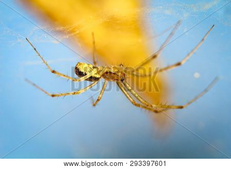 This Is A Close Up Of A Spider