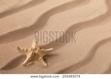 seastar or starfish on rippled beach sand. Summer vacation background.
