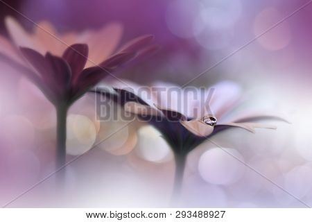 Beautiful Macro Shot Of Magic Flowers.border Art Design. Magic Light.extreme Close Up Macro Photogra