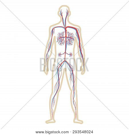 Abstract Blood Circulation System Of Human On White Background Vector Illustration