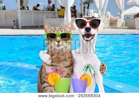 Dog Jack Russell Terrier And Cat In Glasses, Hugging Each Other, Holding Cocktails In Paws On The Po