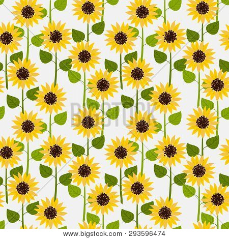 Sunflowers On White Pale Background Seamless Pattern.