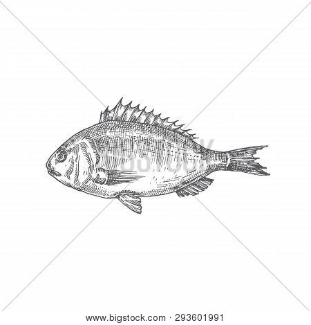 Dorado Hand Drawn Vector Illustration. Abstract Fish Sketch. Engraving Style Drawing.