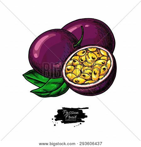 Passion Fruit Vector Drawing. Hand Drawn Tropical Food Illustration. Summer Passionfruit.