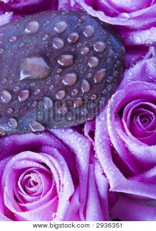 Zen & Roses