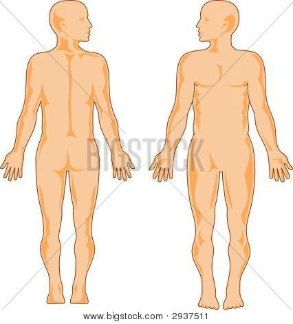 Human Anatomy Looking Side