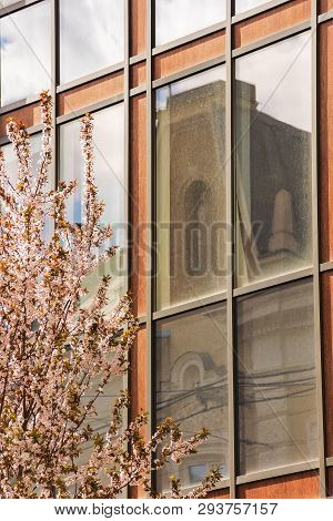 Apple Blossom In The Town. Beautiful Urban Scenery In Springtime. Blooming Twig In Front Of A Modern