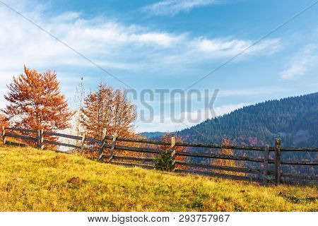 Autumn Countryside Scenery In Mountains. Wonderful Sunny Weather. Trees In Red Foliage Behind The Wo