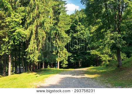 Road In To The Deep Spruce Forest. Wonderful Sunny Weather. Summer Tourism Concept