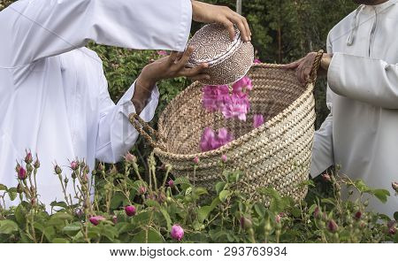 Traditional Omani Hat Called Kuma Being Used To Collect Rose Petals