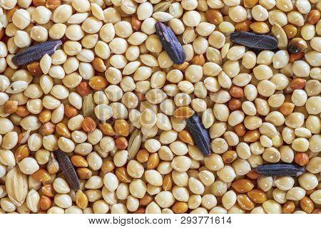 Bird Food, Birdseed, Sunflower, Millet Seeds Background Texture