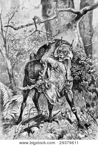 "Lynx kills moose. Engraving by Specht from picture by painter Dombrowski. Published in magazine ""Niva"", publishing house A.F. Marx, St. Petersburg, Russia, 1893 poster"