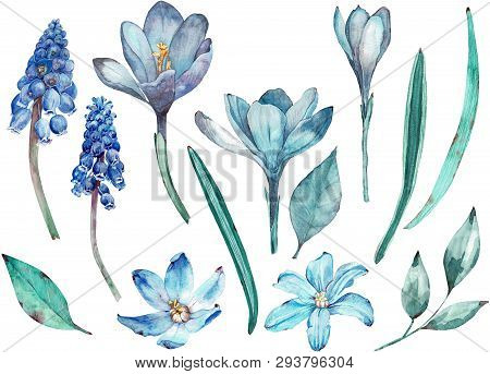 Blue Spring Flowers Clip-art. Separate Elements Of Flowers And Leaves Isolated On White Background.