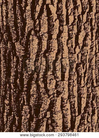 Vector Brown Texture Of Oak Tree Bark