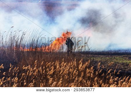 Raging Forest Spring Fires. Burning Dry Grass, Reed Along Lake. Grass Is Burning In Meadow. Ecologic