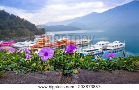 Violet Flower And Morning Sunrise At Sun Moon Lake Shuishe Pier, Taiwan