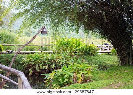 Wooden Path Way In Forest With Bamboo Garden