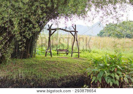 Swing Under The Bamboo Tree In Garden Field
