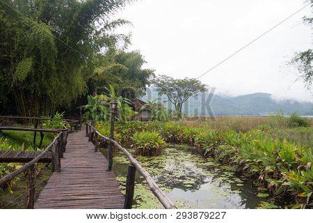 Closeup Bamboo Way Wooden Bridge In Green Forest