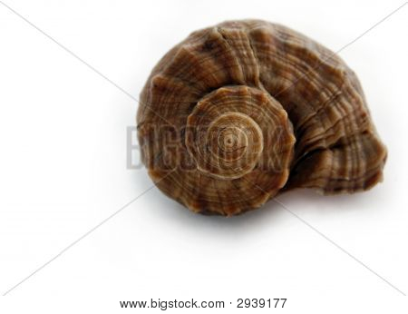 Colored Spiral Shell