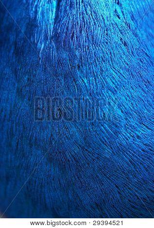 hermosa pluma de pavo real