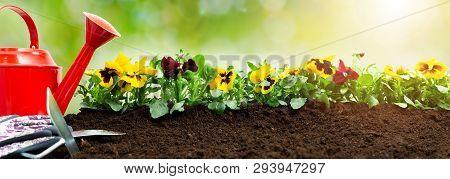 Gardening Tools On Soil Background. Planting Spring Pansy Flower In Garden. Spring Garden Work Conce