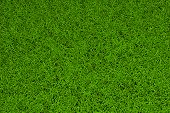 high resolution image of green grass background poster