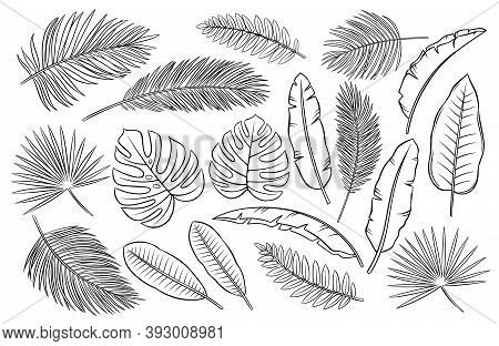 Drawn Tropical Leaves. Outline Exotic Monstera, Banana Leaf, Palm And Fern. Summertime Paradise Desi