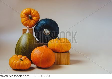 Orange And Green Decorative Pumpkins In Creative Autumn Composition On Trendy Earth Tones Color Back