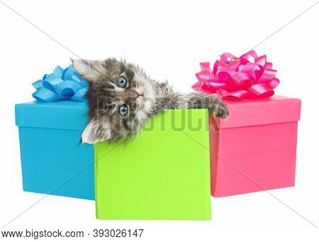 Adorable Little Gray And White Kitten Peaking Out Of A Green Birthday Present With Head Tilted Comic