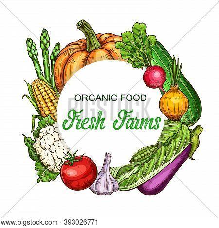 Organic Vegetables And Greenery Frame. Pumpkin, Radish And Zucchini, Onion, Lettuce Salad And Eggpla