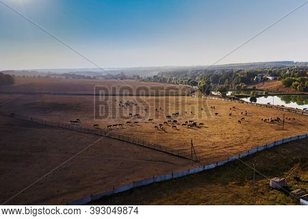 Horse Herd At A Ukrainian Ranch Horse Farm During The Day Grazing In A Horse Paddock - Autumn Landsc