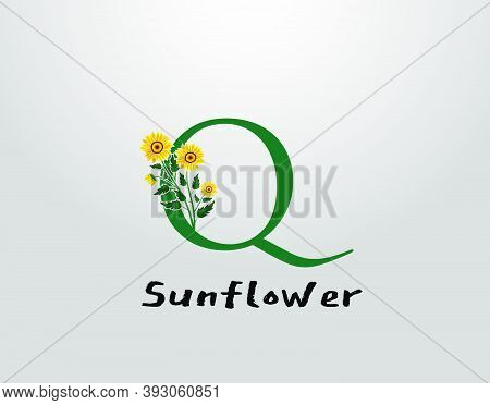 Q Letter With Sunflower Vector Design. Flower Plant Q Logo Icon. Typography Design
